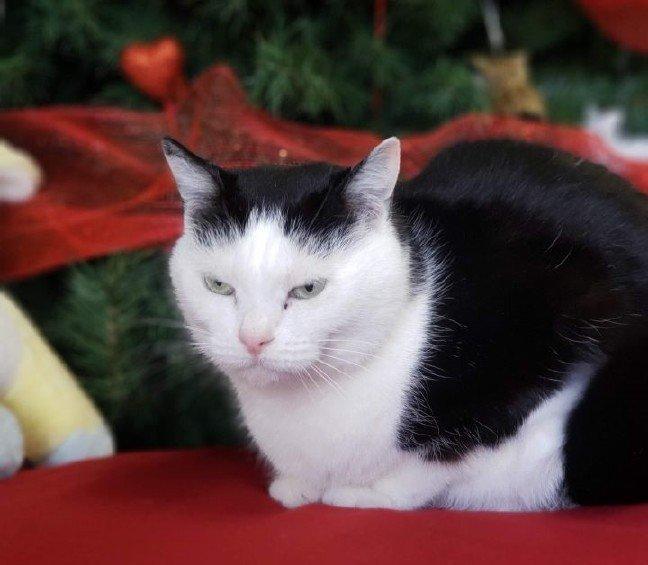 20-01/27/perdita-worlds-worst-cat.jpg