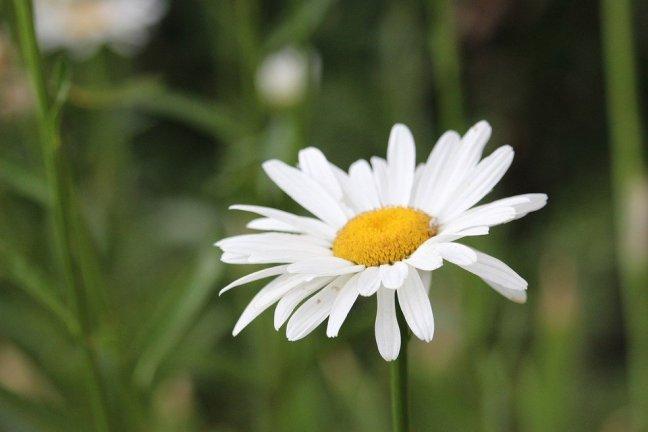 20-02/12/flower-4345153_960_720.jpg